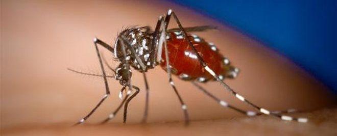 Οι επικίνδυνες περιοχές για τον ιο Δ. Νείλου